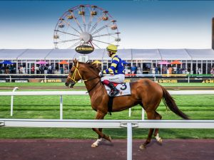 How we partnered with the people of Gauteng to breathe new life into Joburg's biggest horse racing day – The Gauteng Summer Cup